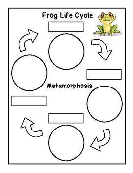 Differentiated Frog Life Cycle Metamorphosis Diagram Graphic Organizer