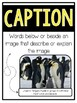 Differentiated Nonfiction Text Features Posters, Book, Activities, Assessments