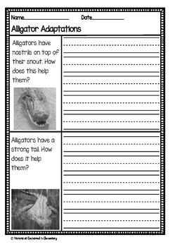 Differentiated Nonfiction Unit: Alligators