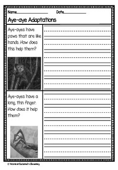 Differentiated Nonfiction Unit: Aye-ayes