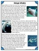 Differentiated Nonfiction Unit: Beluga Whales
