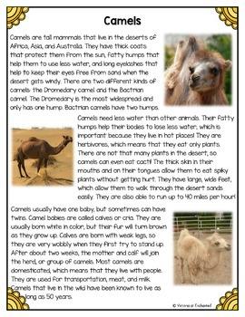Differentiated Nonfiction Unit: Camels