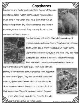 Differentiated Nonfiction Unit: Capybaras
