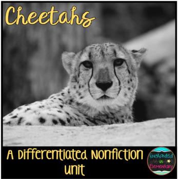 Differentiated Nonfiction Unit: Cheetahs