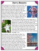 Differentiated Nonfiction Unit: Cherry Blossoms