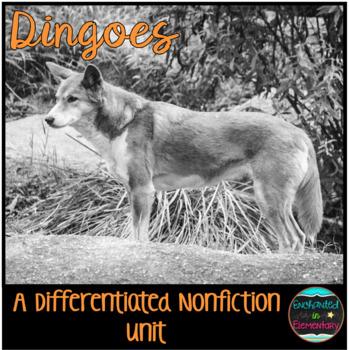Differentiated Nonfiction Unit: Dingoes