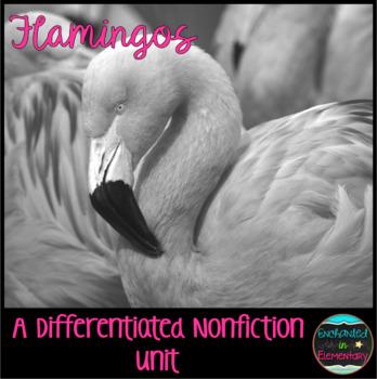 Differentiated Nonfiction Unit: Flamingos