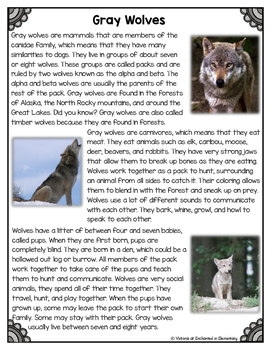 Differentiated Nonfiction Unit: Gray Wolves