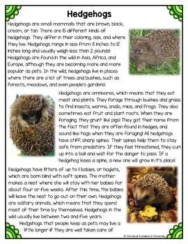 Differentiated Nonfiction Unit: Hedgehogs