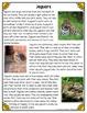 Differentiated Nonfiction Unit: Jaguars