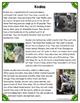 Differentiated Nonfiction Unit: Koalas