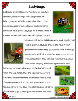 Differentiated Nonfiction Unit: Ladybugs
