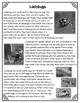 Differentiated Nonfiction Unit: Ladybugs