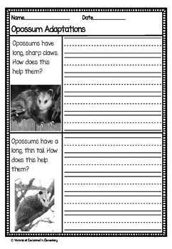 Differentiated Nonfiction Unit: Opossums