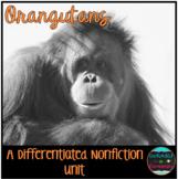 Differentiated Nonfiction Unit: Orangutans