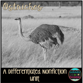 Differentiated Nonfiction Unit: Ostriches