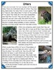 Differentiated Nonfiction Unit: Otters