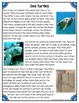 Differentiated Nonfiction Unit: Sea Turtles