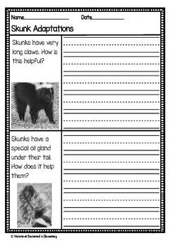 Differentiated Nonfiction Unit: Skunks