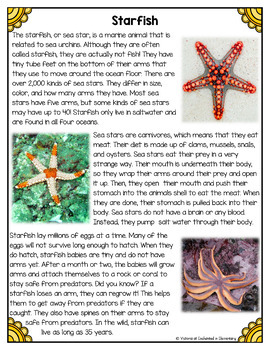 Differentiated Nonfiction Unit: Starfish