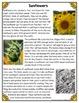 Differentiated Nonfiction Unit: Sunflowers