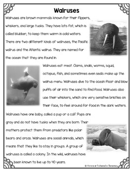 Differentiated Nonfiction Unit: Walruses
