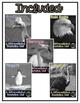 Differentiated Nonfiction Units: Birds Bundle 1
