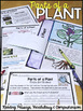 Differentiated Parts of a Plant Reading Passage, with Vocabulary & Comprehension