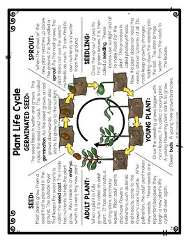 Differentiated Plant Life Cycle Reading Passage, Vocabulary & Comprehension