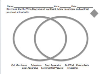 differentiated plant and animal cell venn diagram by. Black Bedroom Furniture Sets. Home Design Ideas
