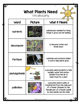 Differentiated What Plants Need Reading Passage, with Vocabulary & Comprehension
