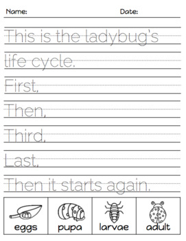 Differentiated Writing Prompts - Life Cycle Edition