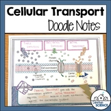 Cellular Transport Illustrated Notes