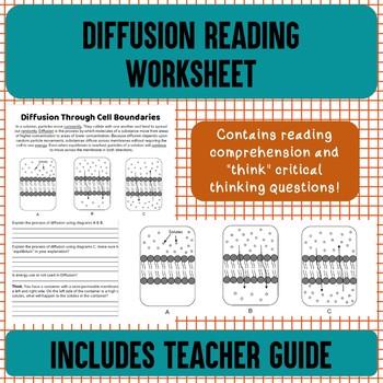 Diffusion Reading Worksheet