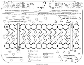 and Osmosis Coloring Worksheet Includes 8 Differentiated Versions
