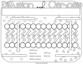 Diffusion And Osmosis Doodle Docs Coloring Worksheet By Science From The South
