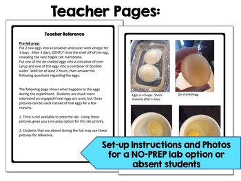 Diffusion and Osmosis Lab using Deshelled Eggs: An Inquiry Lab