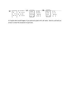 Diffusion and Osmosis Quiz