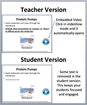 Diffusion and Osmosis through the Cell Membrane - PowerPoint Lesson