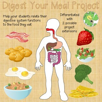 Digest Your Meal Project