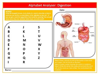 Digestion Alphabet Analyser Science Biology Starter Keywords Activity Homework