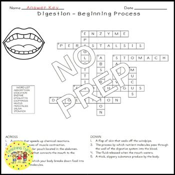 Digestion Beginning Science Crossword Puzzle Coloring Worksheet Middle School