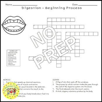 Digestion Beginning Crossword Puzzle