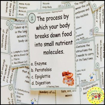 Digestion Beginning Task Cards