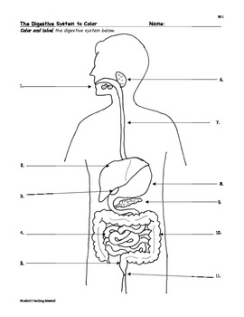 Digestion digestive system facts color worksheet quiz sf 1 ccuart Images