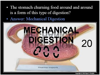 Digestion, Digestive System PowerPoint Review Game, Quiz
