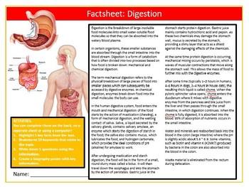Digestion Factsheet Worksheet Science Biology Starter Keywords Activity Homework