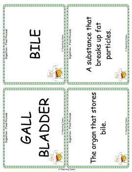 Digestion Final Vocabulary Cards