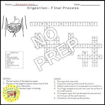 Digestion Final Crossword Puzzle