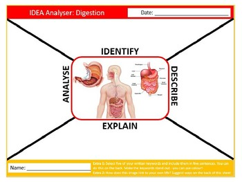 Digestion IDEA Analyser Science Biology Starter Keywords Activity Homework